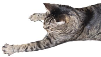 Katzenbild
